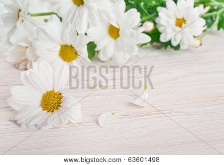 A bouquet of white daisies, wildflowers
