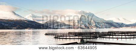 Fish farms in north Norway 3/1 Ratio