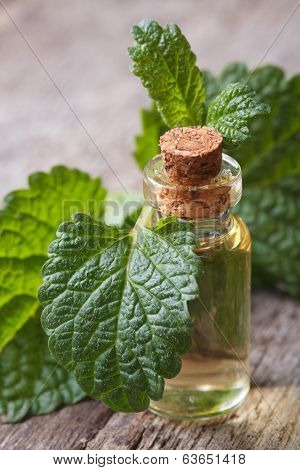 Melissa Tincture In Glass Bottle With Fresh Leaves