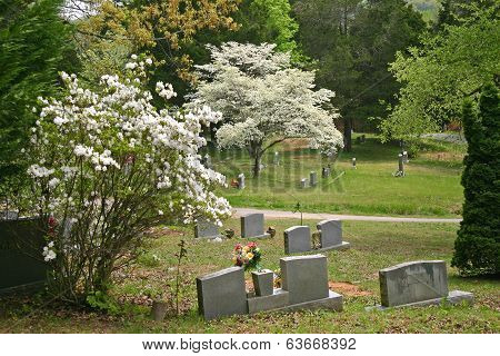 White Azalea & Dogwood in Cemetery