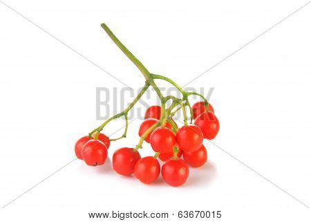 Cluster Of Red Rowanberry
