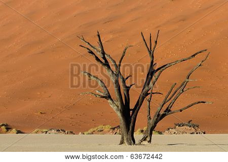 Petrified Tree In Front Of An Orange Sand Dune