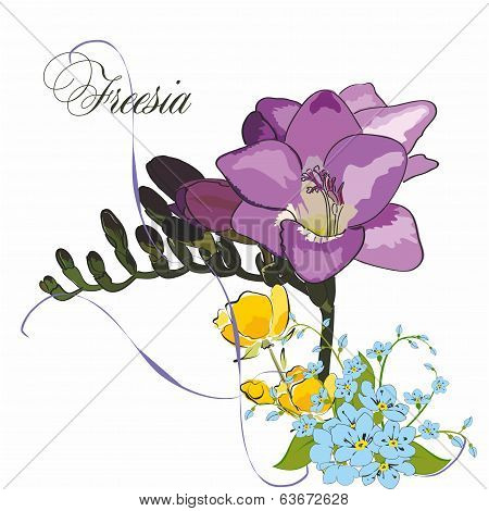Beautiful Freesia, Isolated On White With Forget Me Not And Spring Yellow Flowers