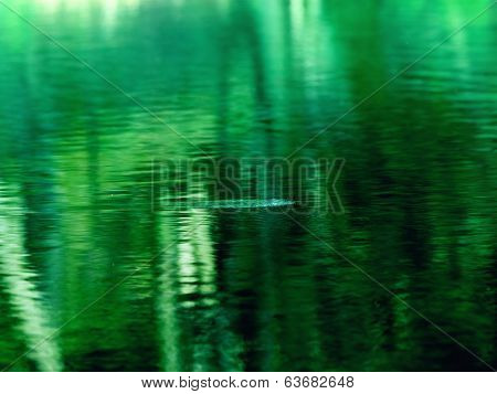 spooky or murky water abstract. Spooky jungle like water surface, right after some small creature has jumped in the water.