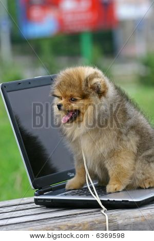 Pom Puppy And Notebook