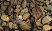 image of superimpose  - Leaves and gravel superimposed on the ground - JPG