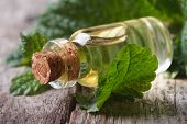 stock photo of borage  - Aromatic oils Lemon balm in a glass bottle with fresh leaves macro horizontal - JPG