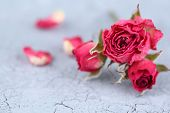Beautiful pink dried roses on old wooden background