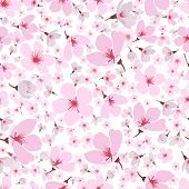 picture of dainty  - Seamless background pattern of pink Sakura blossom or Japanese flowering cherry symbolic of Spring in a random arrangement on a white background  square format suitable for textile  wallpaper or tiles - JPG