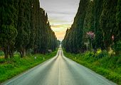 foto of row trees  - Bolgheri famous cypresses trees straight boulevard landscape - JPG