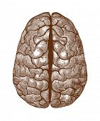 stock photo of leipzig  - Human brain vintage illustration - JPG