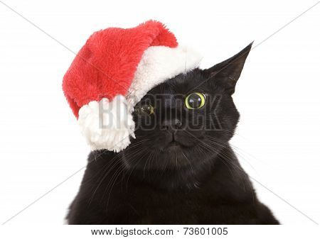 Black Cat Santa - Cute Christmas Cat, Christmas Pet With Santa Claus Hat