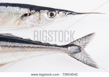 Fresh Needlefish For A Healthy Diet