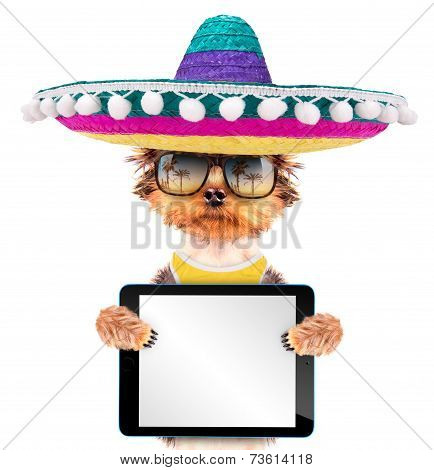 dog wearing a mexican hat with tablet pc