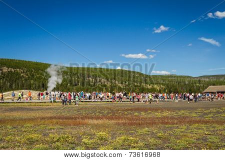 Old Faithful Geyser In Yellowstone