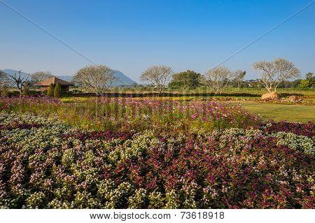 Flower Garden, Chiangrai, Thailand