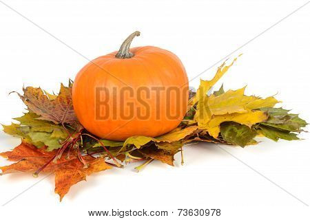 Pumpkin on the maple leaves