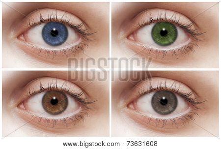 Four colors Four eyes