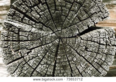 Wood Cross Section Of Tree Trunk Year Rings , On Cracked Wooden  Log
