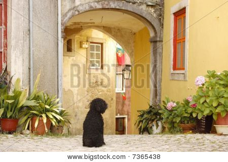Dog Sitting At A Courtyard Entrance