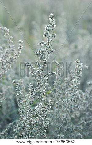 Natural Background. Closeup Of Steppe Autumn Grass