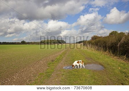 Pet Dog In The Yorkshire Wolds