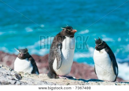 Pingüinos de penacho amarillo