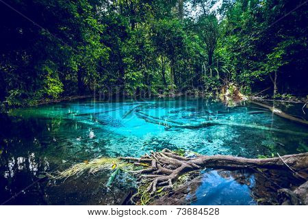 Emerald blue Pool. Krabi, Thailand.