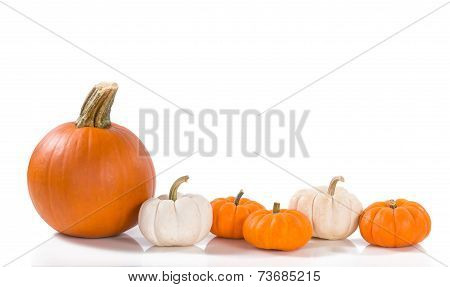 Pumpkins Against White Background