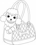 foto of poodle  - Glamorous poodle peeking out of a handbag - JPG