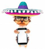 stock photo of mexican-dog  - cute puppy dog wearing a mexican hat holding phone with empty white screen - JPG