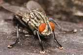 image of blowfly  - Fly on the table in the garden - JPG