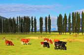 foto of pastures  - Rural idyll in Chile - JPG