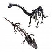 picture of dinosaur skeleton  - The image of dinosaur - JPG