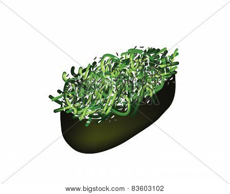 Seaweed Salad Sushi Or Hiyashi Wakame Sushi