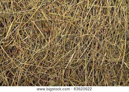 Golden Hay Texture Background Close-up