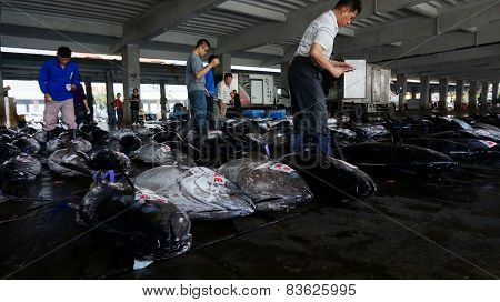 .buyers Inspect Tuna Fish Before Bidding In Donggang, Taiwan.....