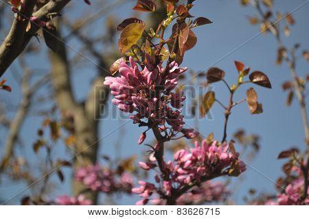 Beautiful Pink Blossom