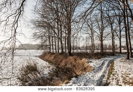 Snowy Path Between Leafless Trees In Wintertime