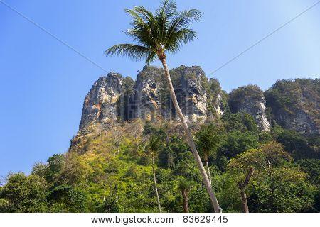 Palm Tree in Tonsai Bay.