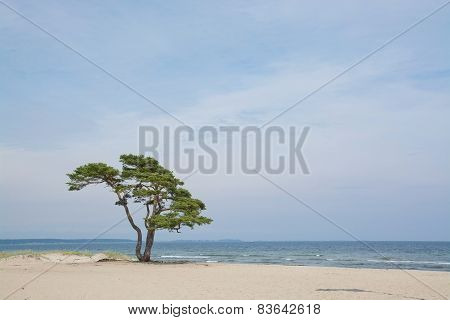 Lone tree on sandy beach