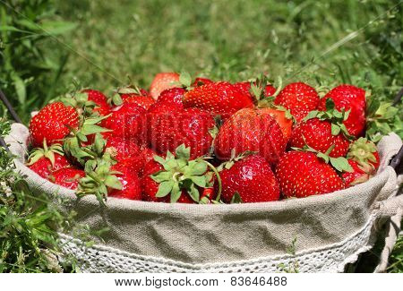 Fresh, Juicy And Healthy Strawberries, On Green Background