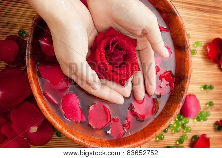 Female Hands In Bowl Of Water With Red Rose