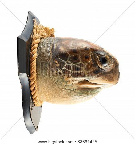 Turtle's head as a hunter's trophy
