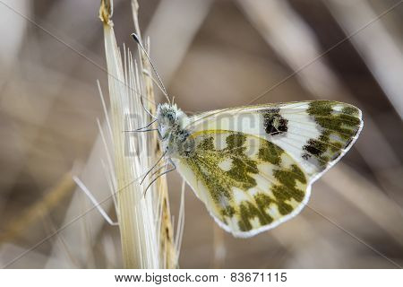 small butterfly on a branch or flower with extreme detail