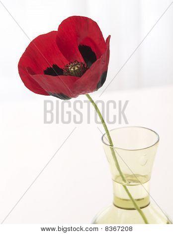 Red Poppy in Vase, High Key