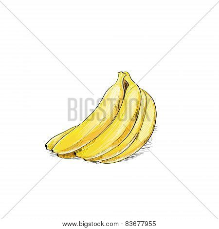 banana bunch color sketch draw isolated over white background