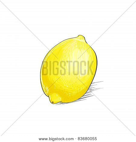 lemon citrus fruit color sketch draw isolated over white background