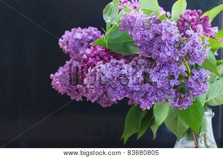 Lilac flowers on black