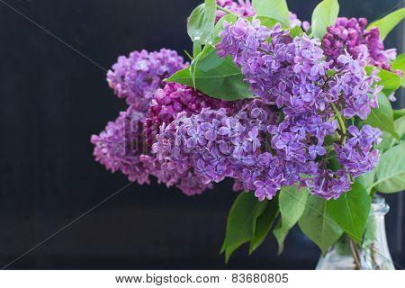 Lilac flowers on black